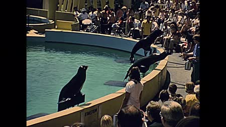 семидесятые годы : Miami, Florida, United States - Circa 1978: seal show in the pool at Seaquarium of Miami with audience people in vintage 70s dress. historical United States archive of America in 1970s. Стоковые видеозаписи