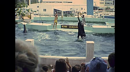 killer whale : Miami, Florida, United States - Circa 1978: killer whale show jumping at Seaquarium of Miami in 70s with animal trainer. The historical United States of America in 1970s.