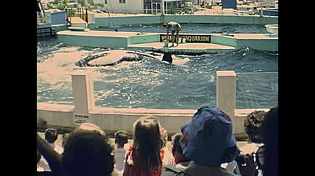 killer whale : Miami, Florida, United States - Circa 1978: Seaquarium killer whales feeding for touristic show on holiday at Miami in 70s. The historical United States of America in 1970s. Stock Footage