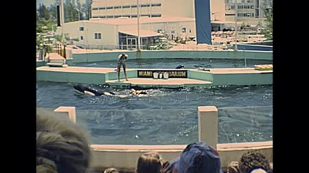 семидесятые годы : Miami, Florida, United States - Circa 1978: killer whale dangerous show with trainers head in orca mouth at Seaquarium of Miami in 70s. Historical USA archive of America in the 1970s.