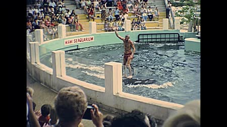 семидесятые годы : Miami, Florida, United States - Circa 1978: Miami Seaquarium archive 8mm of animal trainer riding a killer whale for show in the aquarium pool. Historical USA archive of America in the 1970s.