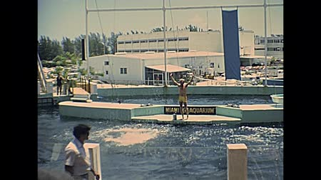dolphin : Miami, Florida, United States - Circa 1978: Historical Miami Seaquarium in the 1970s. Animal trainer performing dolphin jumps in the aquarium pool.