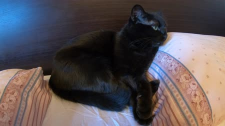tlapky : black cat with green eyes sleeping safe and relaxed in bed between the pillows.