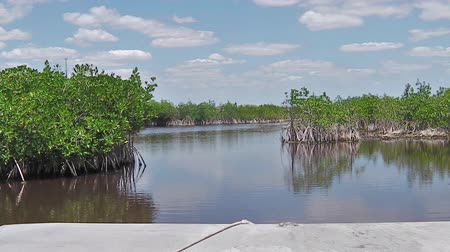 jacaré : Mangrove airboat tour in Everglades National Park, Florida in United States of America. Popular tourist destination to see typical vegetation and alligators.