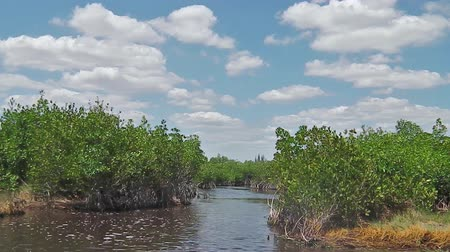 krokodil : Everglades airboat tour POV in National Park, Florida in United States of America. Popular tourist destination to see typical vegetation and alligators.