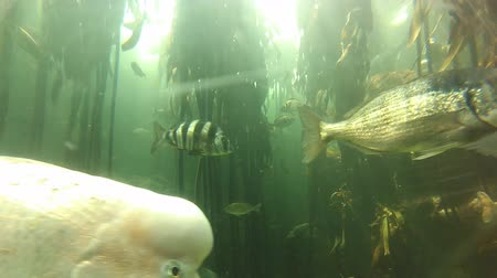 生態系 : Dubai, United Arab Emirates - May 1, 2013: ecosystem with fishes and water plants in the famous Dubai aquarium.
