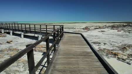 доисторический : Point of view of wooden walkway at Hamelin Pool Stromatolites, a protected Marine Nature Reserve in Shark Bay, Western Australia. Sunny day with blue sky. Copy space. Стоковые видеозаписи