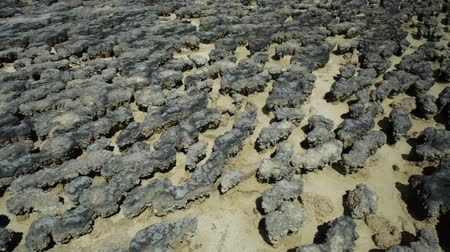 доисторический : Close-up of Hamelin Pool Stromatolites with low tide a protected Marine Nature Reserve in Shark Bay, Western Australia. Natural background. Стоковые видеозаписи
