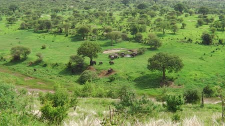 np : aerial view of a herd of African elephants moving in the grassland of the Tarangire National Park of Tanzania in Africa.