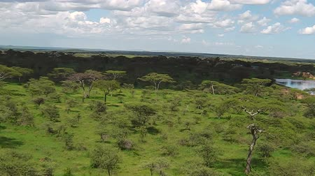 np : aerial view panorama of Serengeti National Park of Tanzania in Africa.