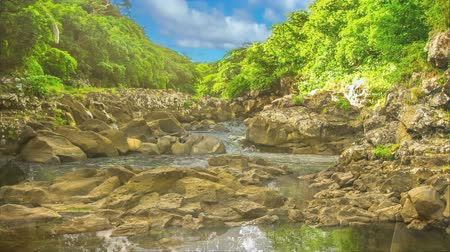 tamarin : Cinemagraph of sky reflected in the calm waters of Black River Gorges National Park, the largest protected forest of Mauritius, Indian Ocean, Africa. Scenic landscape of popular travel destination.
