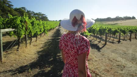 feltörés : Australian Margaret River farmer woman walking in the harvest at Wilyabrup in the wine region in Western Australia. Vineyard winery grape picking.