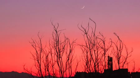 decadência : Refinery factory at twilight with sky background. Industrial dramatic red sunset with silhouette of bare trees and half moon. Concept of pollution and sunset of modern Industry and business decline. Vídeos