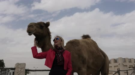 arabian : Happy woman touches and interacts with a camel in Doha city downtown, near Souq Waqif, the old market in Qatar. Caucasian tourist traveler in Middle East, Arabian Peninsula. Sunny day blue sky.