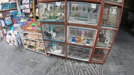 stragan : Doha, Qatar - February 19, 2019: pet shop and cages along pedestrian road inside Bird Souq near Souq Waqif, the old market and popular tourist attraction in Doha center, Middle East, Arabian Peninsula