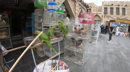 inseparable : Doha, Qatar - February 19, 2019: many parrots, pet shop and cages at Bird Souq inside Souq Waqif, the old market and popular tourist attraction in Doha center, Middle East, Arabian Peninsula.