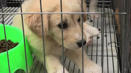captivity : puppy dog in a cage in pet store. Stock Footage