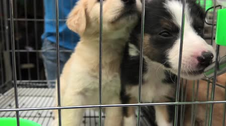 weterynarz : puppy dogs drinking in a cage in pet store.