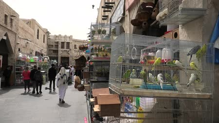 gaiola : Doha, Qatar - February 19, 2019: Inseparable Parrots cages in foreground at Bird Souq inside Souq Waqif, the old market and popular tourist attraction in Doha center, Middle East, Arabian Peninsula.