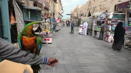 kafes : Doha, Qatar - February 19, 2019:A colorful brazilian parrot standing on an arm at Bird Souq inside Souq Waqif, the old market tourist attraction in Doha center, Qatar, Middle East, Arabian Peninsula. Stok Video