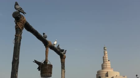mosque doha : Closeup of pigeon at old well fountain, famous tourist place in the middle of Souq Waqif in Doha center, Qatar. Middle East, Arabian Peninsula. Sunny blue sky. Doha Mosque on blurred background. Stock Footage