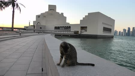 mia : Seafront walkway with a stray cat along Doha Bay with dhow and skyscrapers of Doha West Bay skyline at sunset. Urban cityscape. Qatari capital in Middle East, Arabian Peninsula, Persian Gulf.