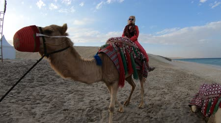 camelo : Happy woman sitting on a camel on sand dunes of beach at Khor al Udaid in Persian Gulf, southern Qatar. Caucasian tourist enjoys camel ride at sunset, a popular tour in Middle East, Arabian Peninsula