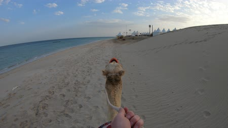 begegnen : First person view of hand riding on camel on Khor al Udaid beach, Persian Gulf of southern Qatar. Tourist on camel ride, a popular tour in Middle East of Arabian Peninsula. Sunny blue sky.
