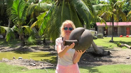 endemic : fanny tourist woman playing with Lodoicea Maldivica nut male and female, the coco de mer or sea coconut at Curieuse Island in Seychelles. The coco de mer is endemic to Praslin and Curieuse. Stock Footage