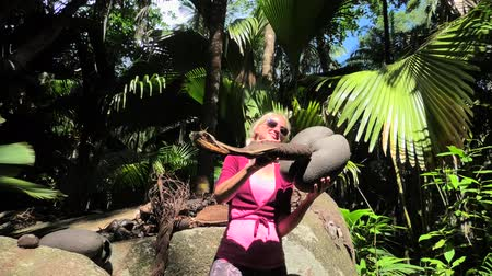 endemic : heaving fun with Coco de Mer female and male plants of Lodoicea Maldivica nut. Sea coconut world largest walnut.