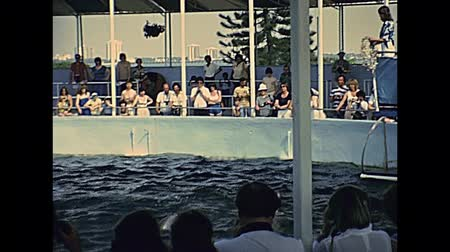 archief : Miami, Florida, United States - Circa 1979: Seaquarium dolphin show with black and white tourists on holiday at Miami in 70s. The historical United States of America in 1970s.