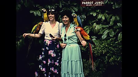 семидесятые годы : Miami, Florida, United States - Circa 1979: South American parrots touristic feeding, in Miami Seaquarium park in Florida in 70s. Historical United States of America in 1979. Стоковые видеозаписи