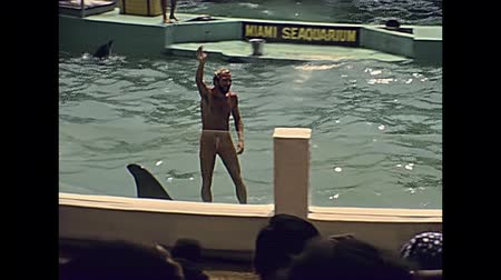 killer whale : Miami, Florida, United States - Circa 1979: killer whale dangerous show with trainers head in orca mouth at Seaquarium of Miami in 70s. Historical USA archive of America in the 1970s.