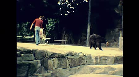 BERLIN, GERMANY - CIRCA 1979: bear feeding in famous Berlin zoo: Zoologischer Gart in 1970s in winter. Historical archival footage in Berlin capital city of Germany 1970s. Стоковые видеозаписи