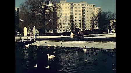 BERLIN, GERMANY - CIRCA 1979: Greenwich Promenade with historical restaurant Tegeler Seeterrassen. People and seabirds on the Tegeler See Lake in winter. Стоковые видеозаписи
