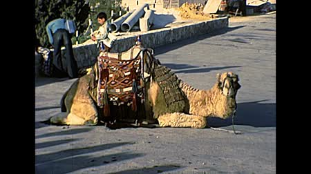 tallit : JERUSALEM, ISRAEL - CIRCA 1979: camel for touristic ride with traditional clothing and talled shawl. City of Jerusalem. Historic restored footage in the 1970s in Israel.