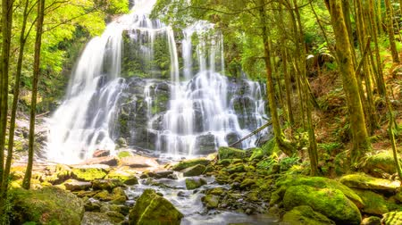 tasmania : Nelson Falls, in an area of rainforest, besides the Lyell Highway. The falls are part of the Franklin-Gordon Wild Rivers National Park, Tasmania, Australia. Cinemagraph