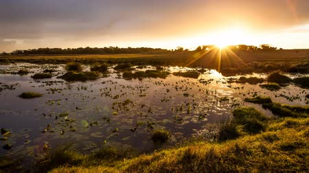 natal : Sunset in the lake with water lilies, iSimangaliso Wetland Park, KwaZulu Natal, South Africa. Cinemagraph loop background.