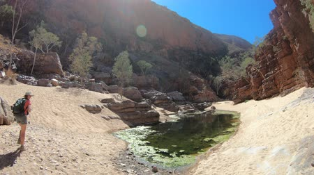 アウトバック : Traveller woman photographer trekking by Pound Walk at viewpoint where rocky cliffs of Ormiston Gorge reflected in a pool. West MacDonnell Range, Central Australia Outback. Northern Territory tourism 動画素材