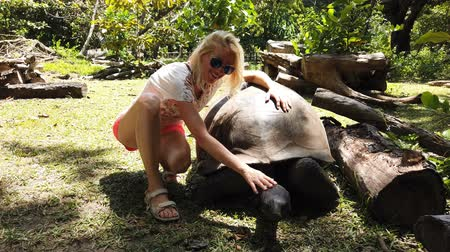 gigante : Happy tourist woman touches curiously Aldabra Giant Tortoise, species Aldabrachelys gigantea which stretches wrinkled neck. Curieuse, Nature Reserve, Seychelles, Indian Ocean. Turtle Sanctuary. Stock Footage