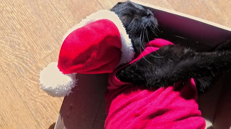 babona : SLOW MOTION: small cat in Christmas dress and Santa Claus hat resting on its box. Christmas holiday concept and New Year eve. Stock mozgókép
