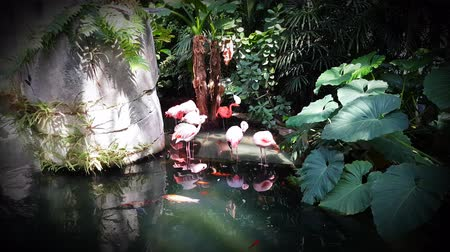 kapr : Beautiful Pink Flamingo Standing In Pond With Koi Fish - Resolution 4K Ultra HD UHD