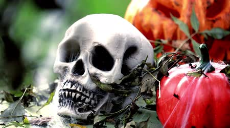 perili : Skeleton Head with Halloween Pumpkins. Halloween Background - HD Video Stok Video