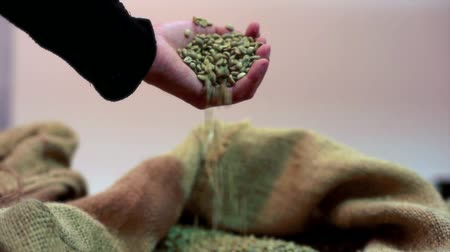 expressed : Hand touching coffee beans inside the jute bag Stock Footage