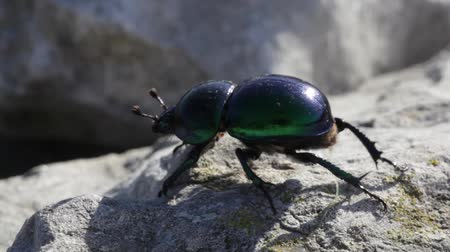 brouk : Beetle in the rock