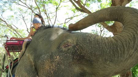 difficults : Mom and daughter feeding elephant with banana. Mom and daughter spend time in the travel.
