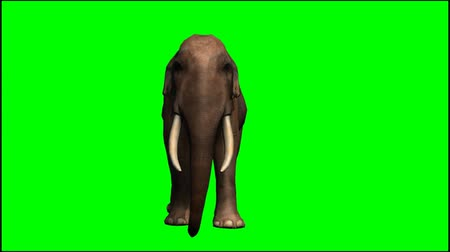 fil :   Elephant walk - seperated on green screen