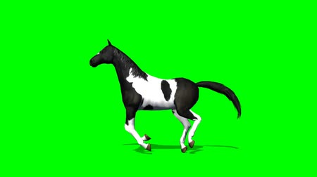 cavalinho : Horse runs - seperated on green screen