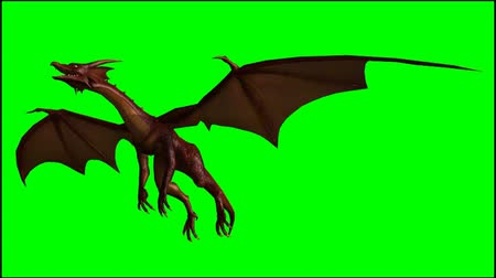 harcos : dragon in flight - seperated on  green screen Stock mozgókép
