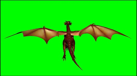 fantasy fantastic : dragon in flight - seperated on  green screen Stock Footage